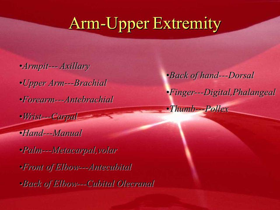 Arm-Upper Extremity Armpit--- Axillary Upper Arm---Brachial