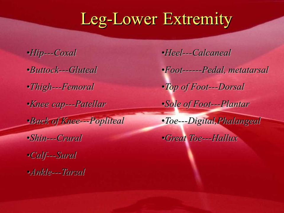 Leg-Lower Extremity Hip---Coxal Buttock---Gluteal Thigh---Femoral