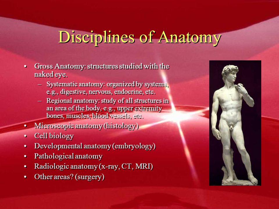 Disciplines of Anatomy