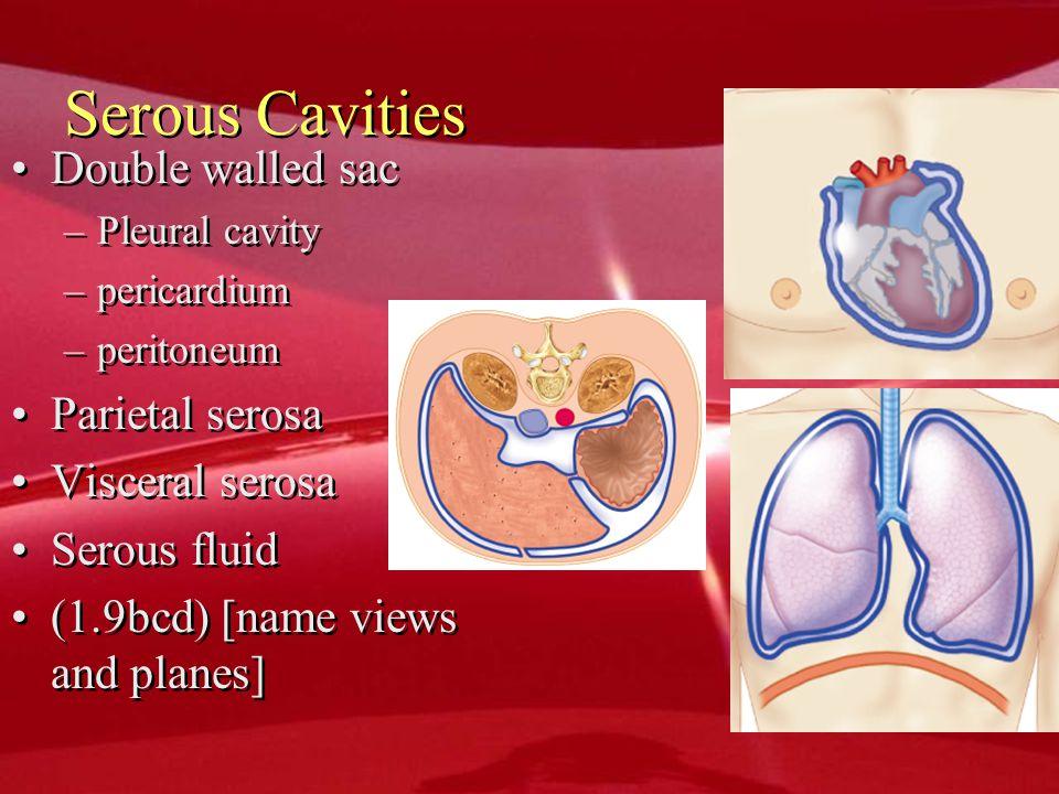 Serous Cavities Double walled sac Parietal serosa Visceral serosa