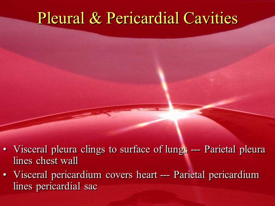 Pleural & Pericardial Cavities