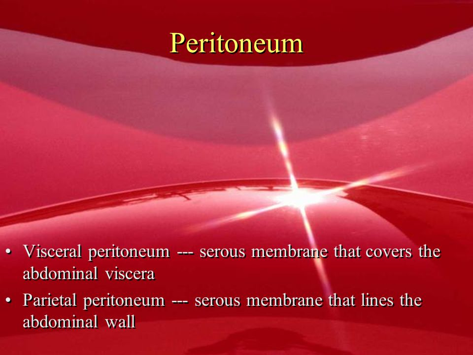 Peritoneum Visceral peritoneum --- serous membrane that covers the abdominal viscera.