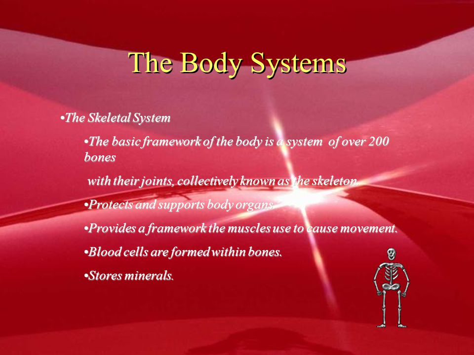 The Body Systems The Skeletal System