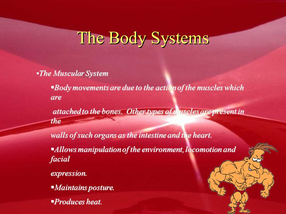 The Body Systems The Muscular System