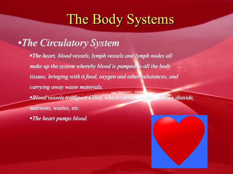 The Body Systems The Circulatory System