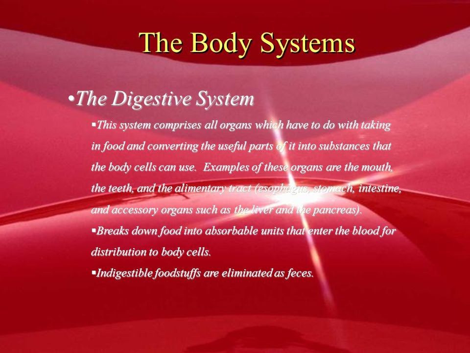 The Body Systems The Digestive System