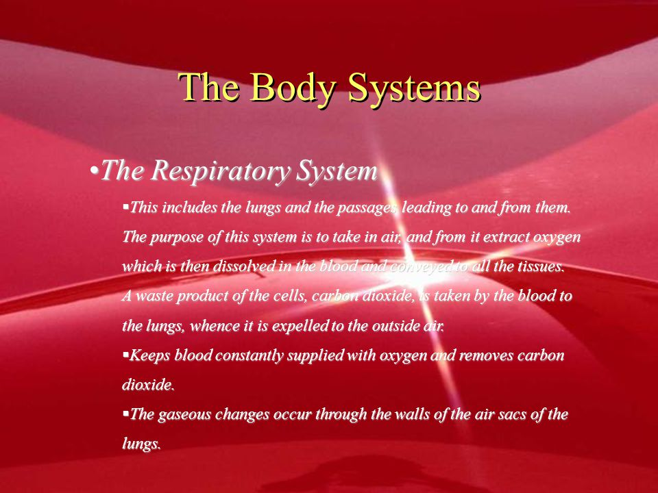 The Body Systems The Respiratory System