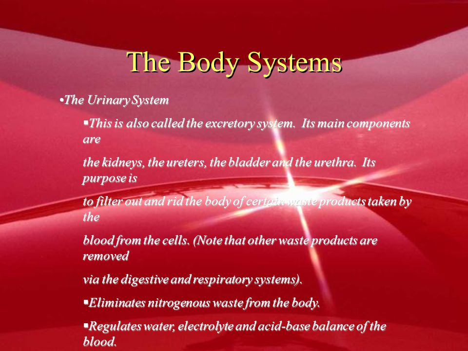The Body Systems The Urinary System