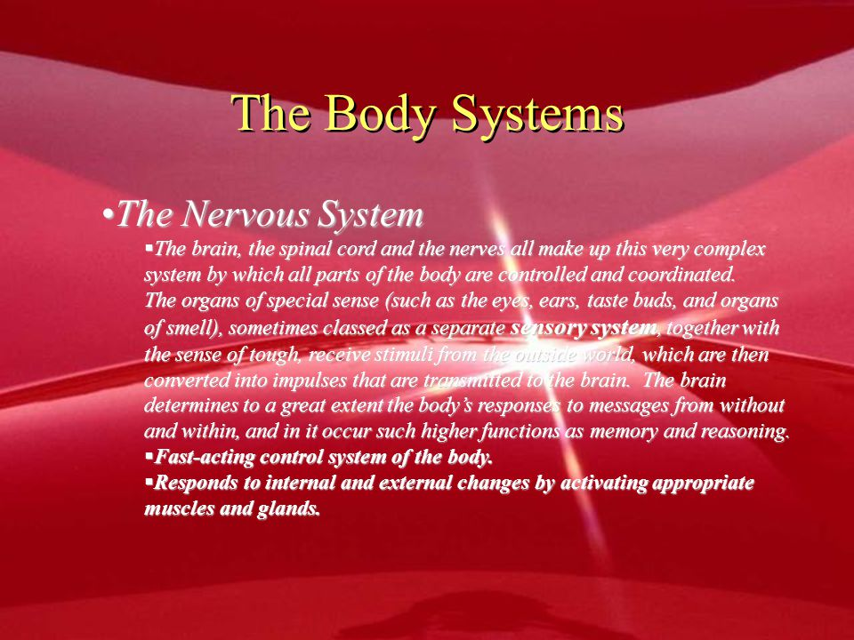 The Body Systems The Nervous System