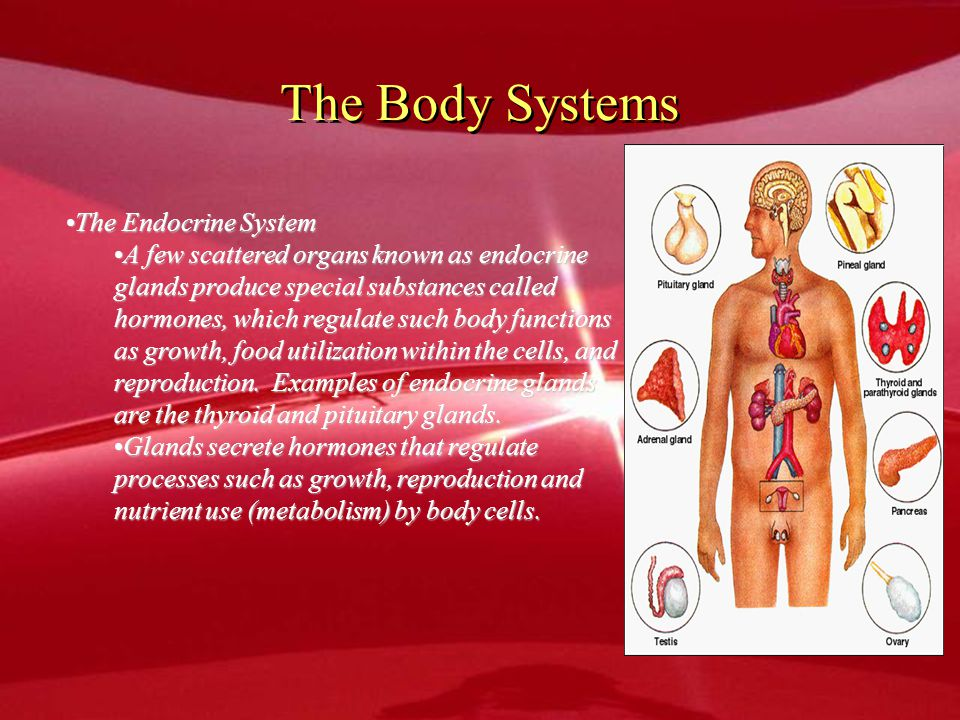 The Body Systems The Endocrine System