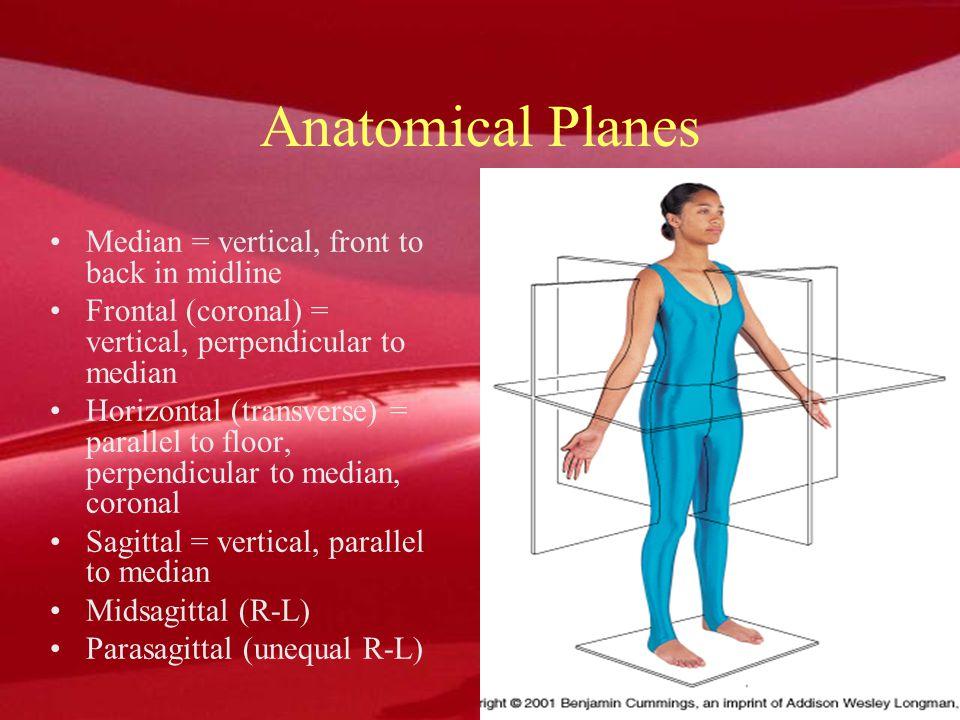 Anatomical Planes Median = vertical, front to back in midline
