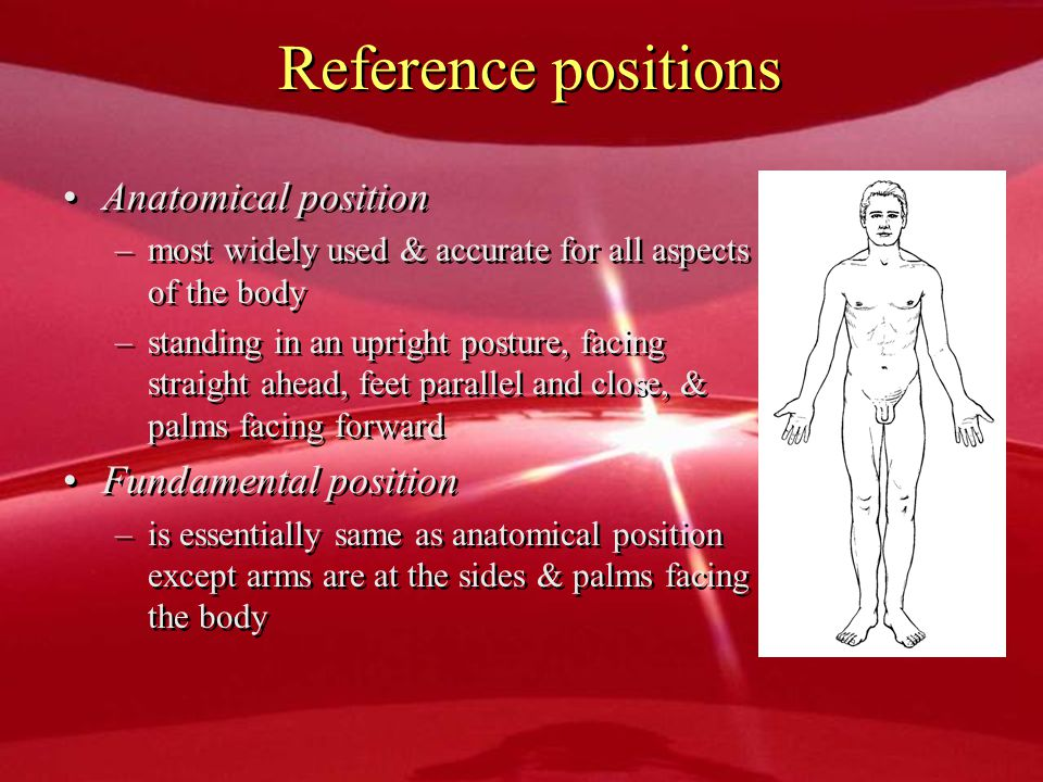 Reference positions Anatomical position Fundamental position