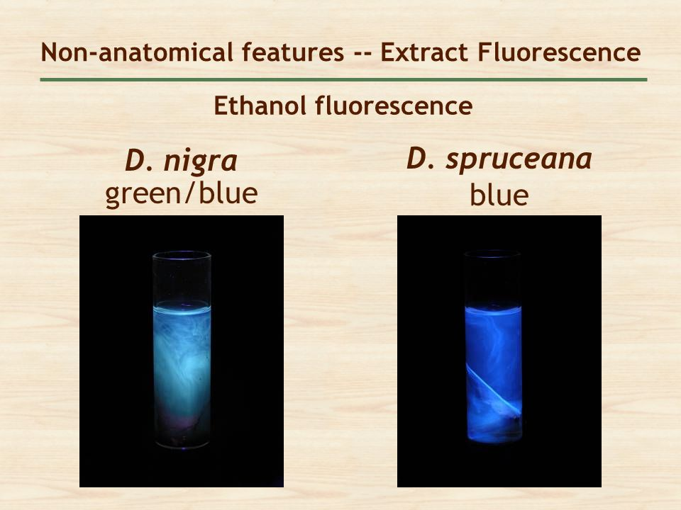 Non-anatomical features -- Extract Fluorescence