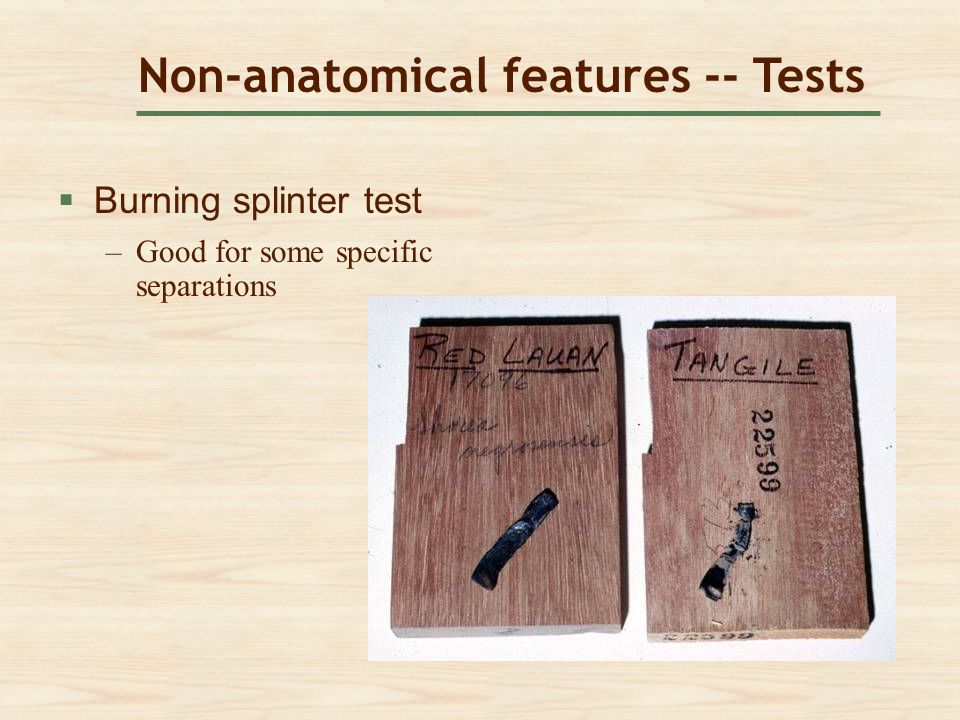 Non-anatomical features -- Tests