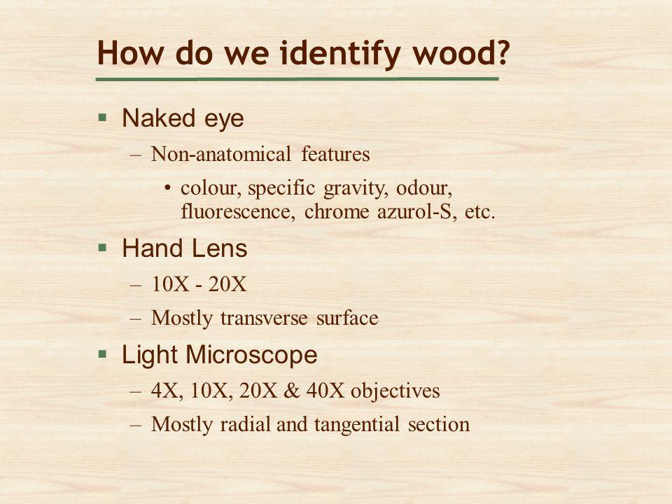 How do we identify wood Naked eye Hand Lens Light Microscope