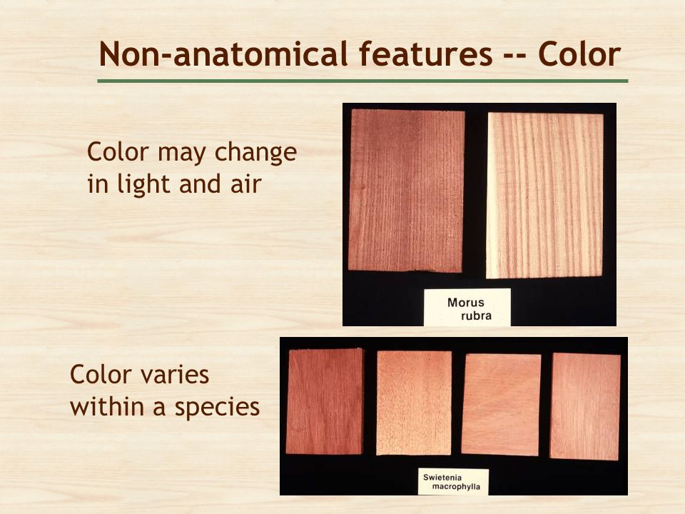 Non-anatomical features -- Color
