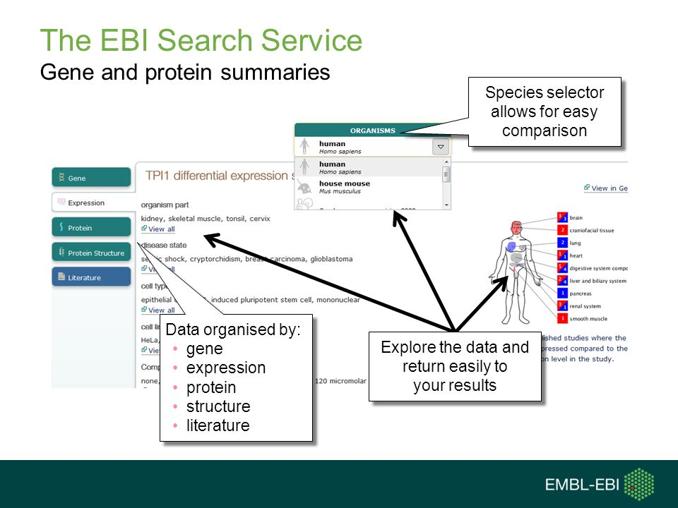 The EBI Search Service Gene and protein summaries
