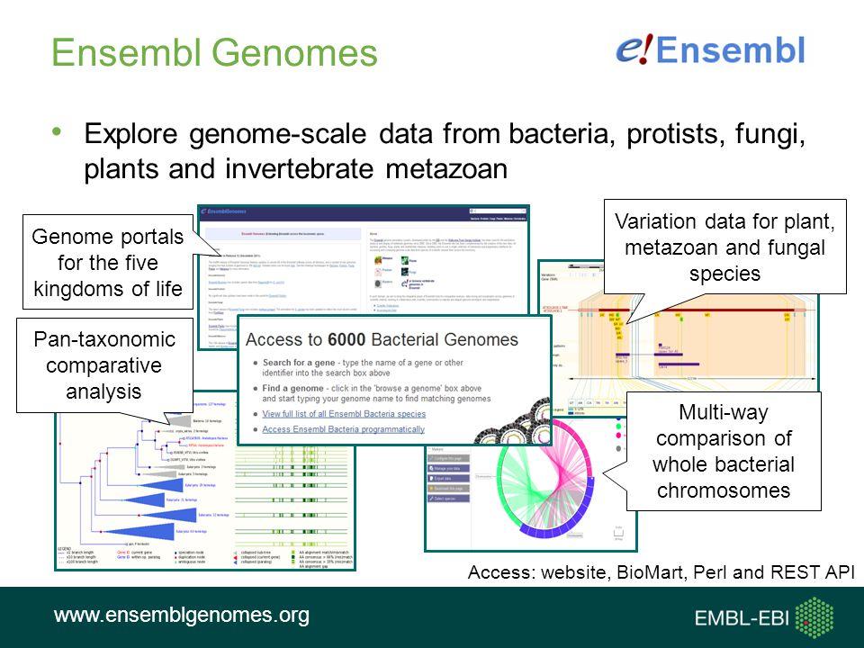 Ensembl Genomes Explore genome-scale data from bacteria, protists, fungi, plants and invertebrate metazoan.