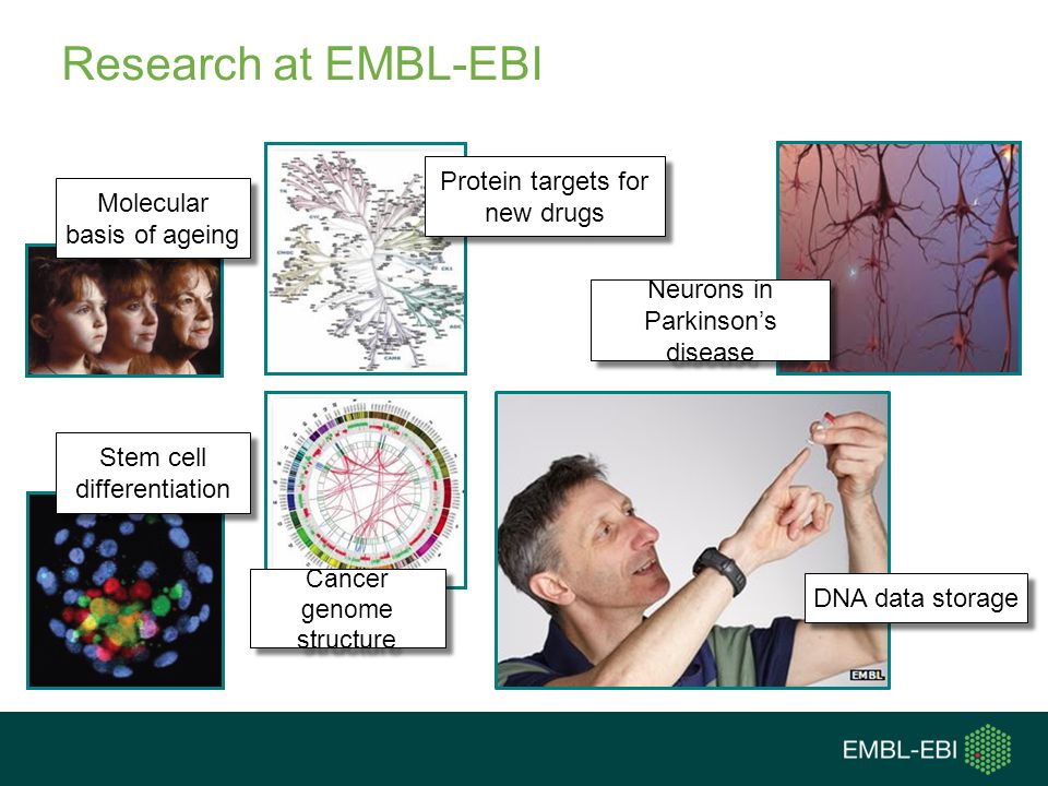 Research at EMBL-EBI Protein targets for new drugs