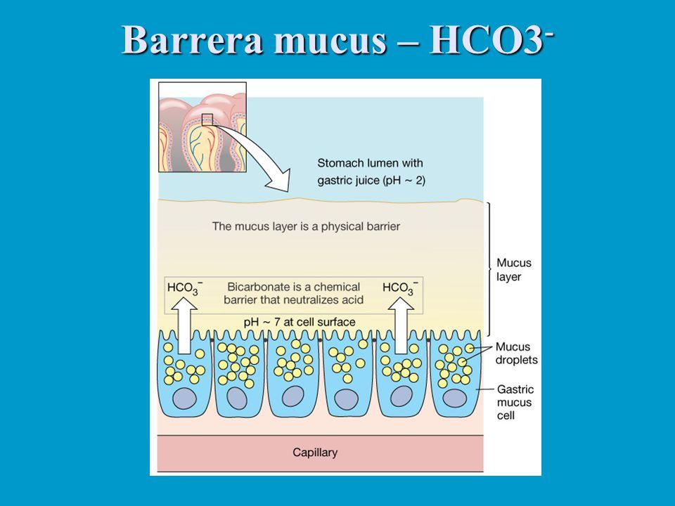 Barrera mucus – HCO3-