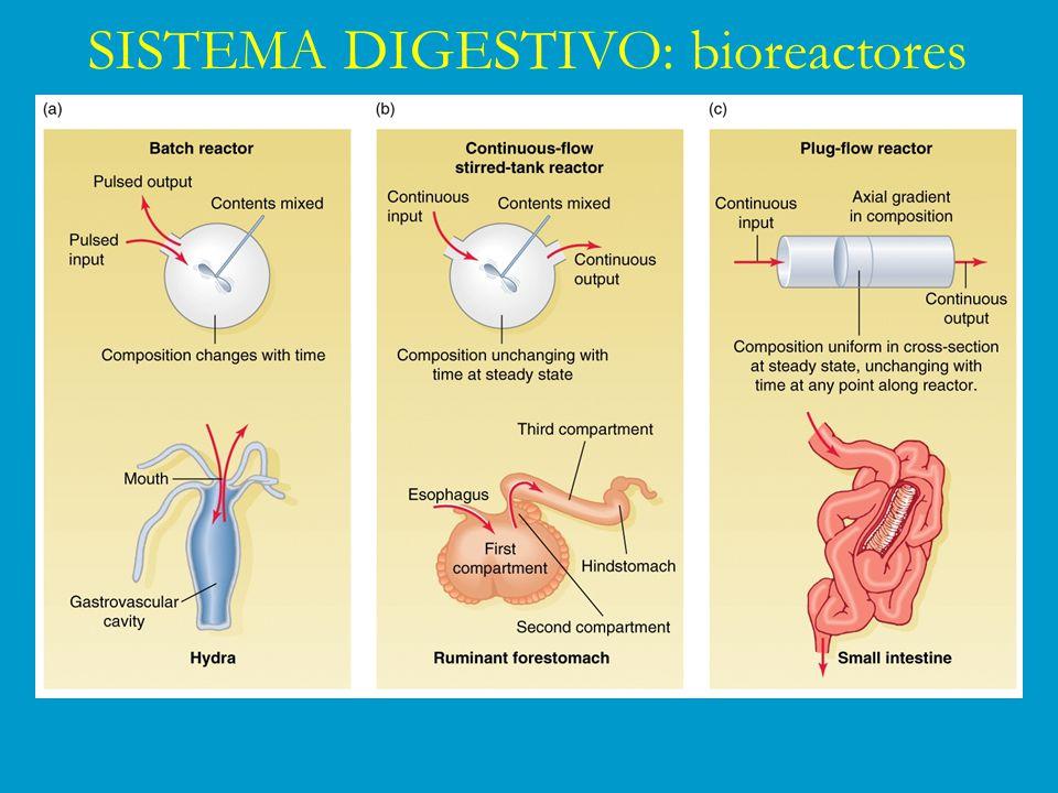 SISTEMA DIGESTIVO: bioreactores