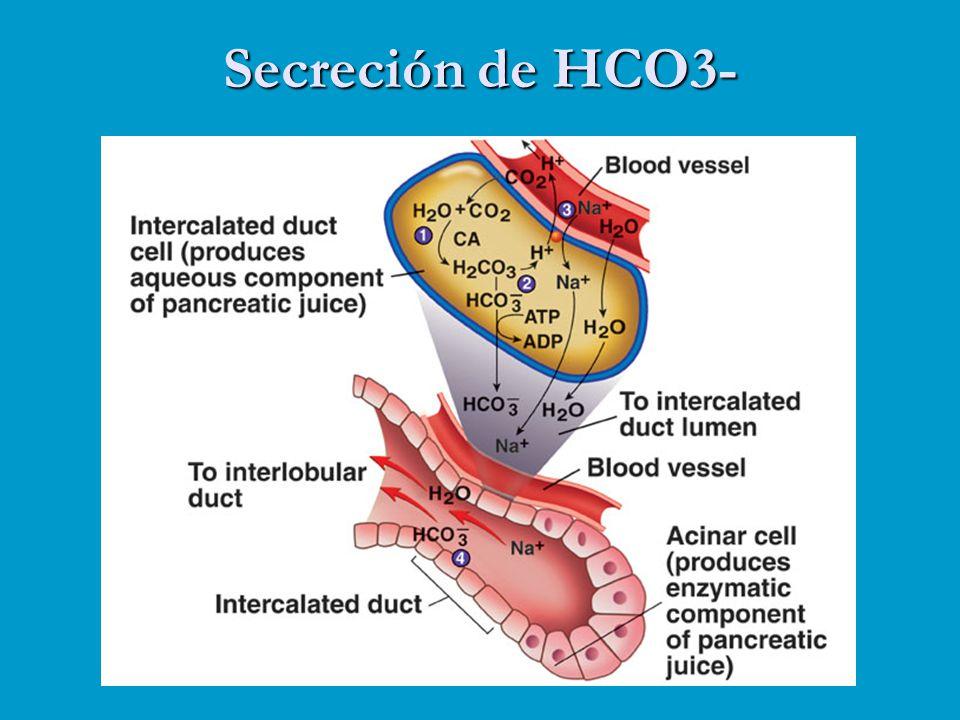 Secreción de HCO3-