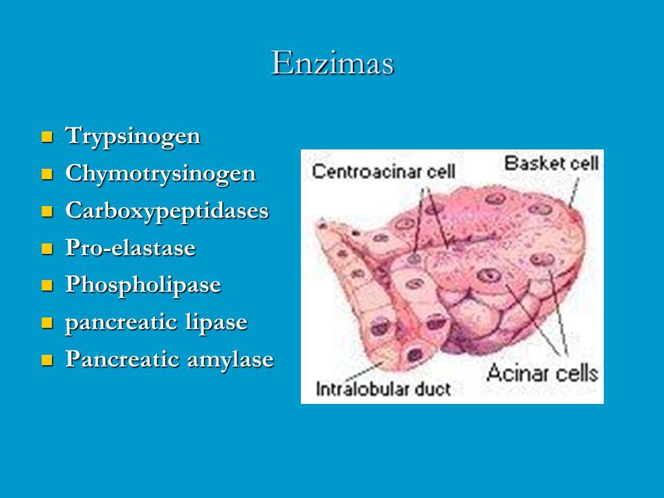 Enzimas Trypsinogen Chymotrysinogen Carboxypeptidases Pro-elastase