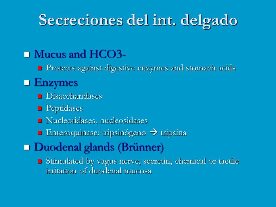Secreciones del int. delgado