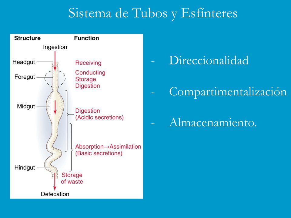 Sistema de Tubos y Esfínteres