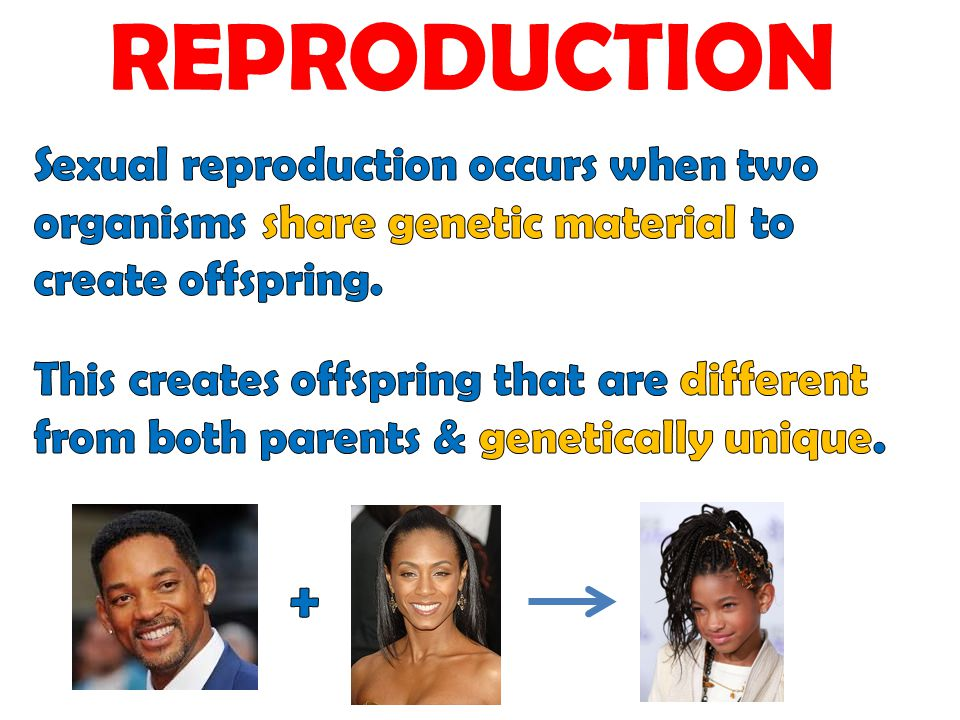 REPRODUCTION Sexual reproduction occurs when two organisms share genetic material to create offspring.