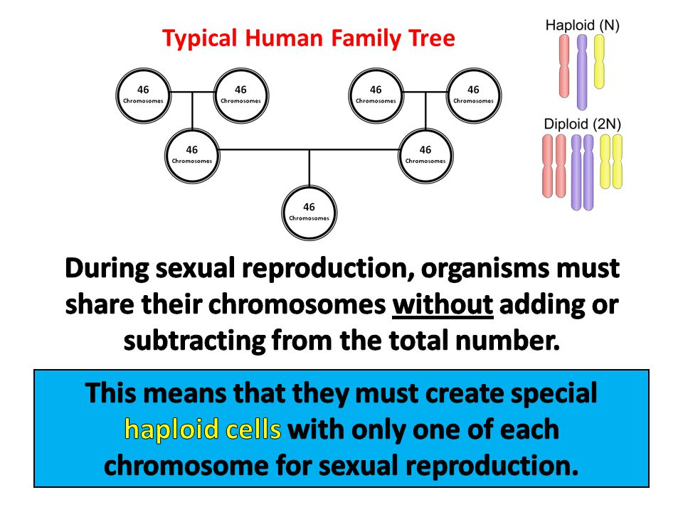Typical Human Family Tree