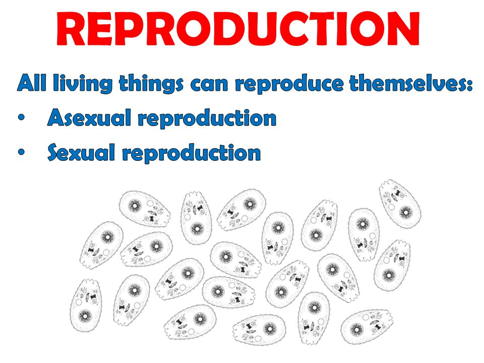 REPRODUCTION All living things can reproduce themselves: