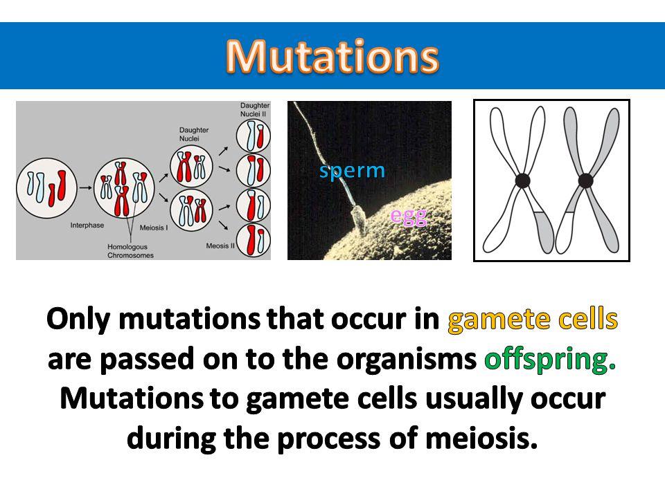 Mutations sperm. egg.