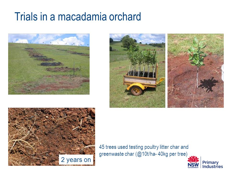 Trials in a macadamia orchard