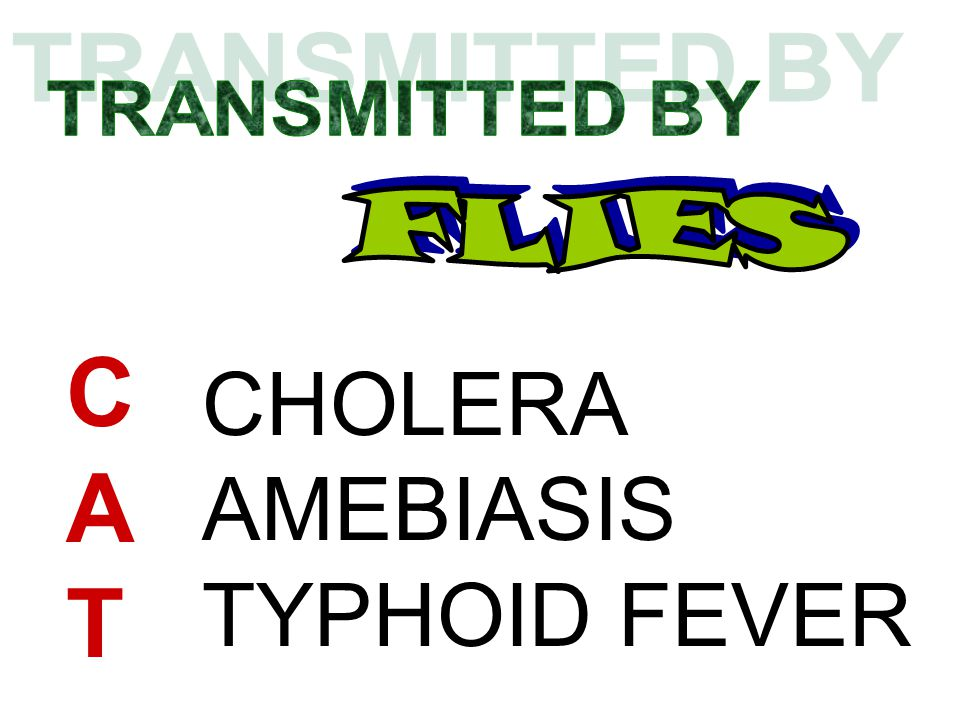 TRANSMITTED BY FLIES C A T CHOLERA AMEBIASIS TYPHOID FEVER