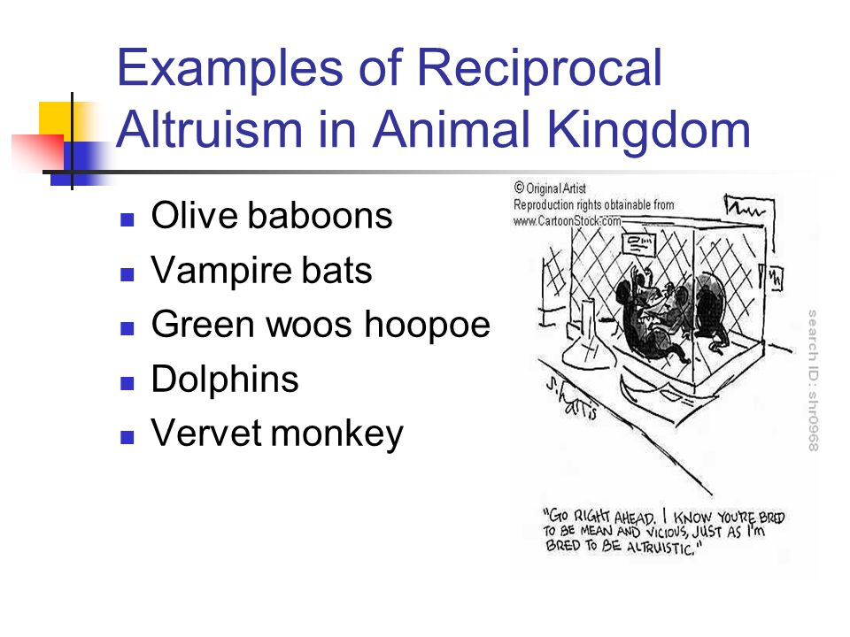 Examples of Reciprocal Altruism in Animal Kingdom