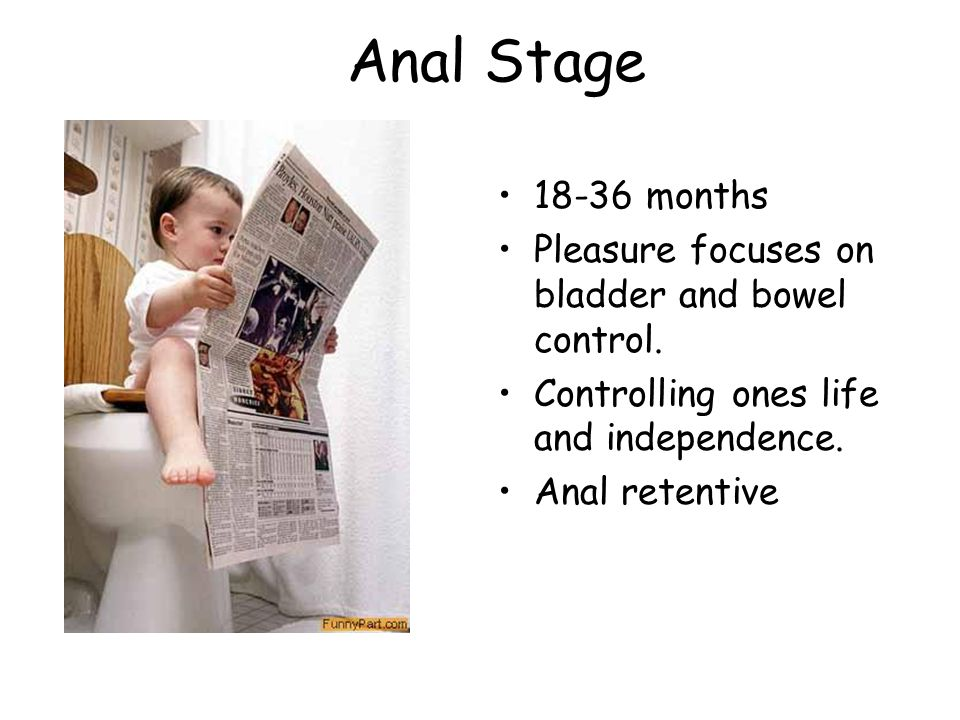 Anal Stage 18-36 months Pleasure focuses on bladder and bowel control.