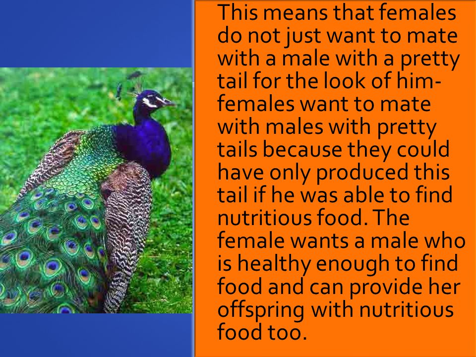 This means that females do not just want to mate with a male with a pretty tail for the look of him- females want to mate with males with pretty tails because they could have only produced this tail if he was able to find nutritious food.