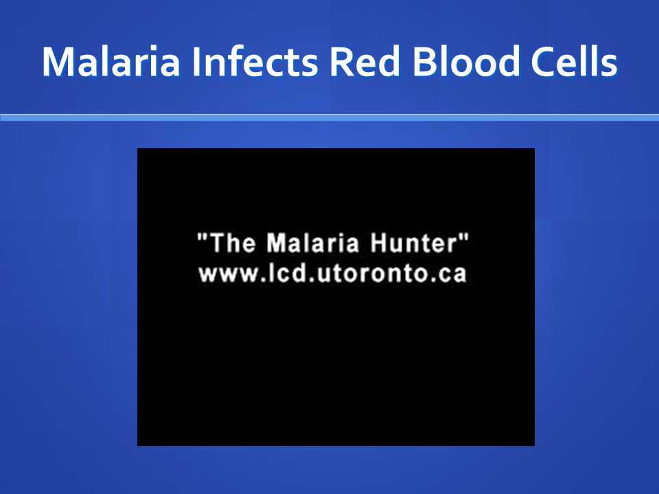 Malaria Infects Red Blood Cells