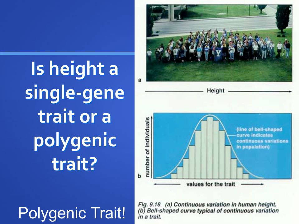 Is height a single-gene trait or a polygenic trait