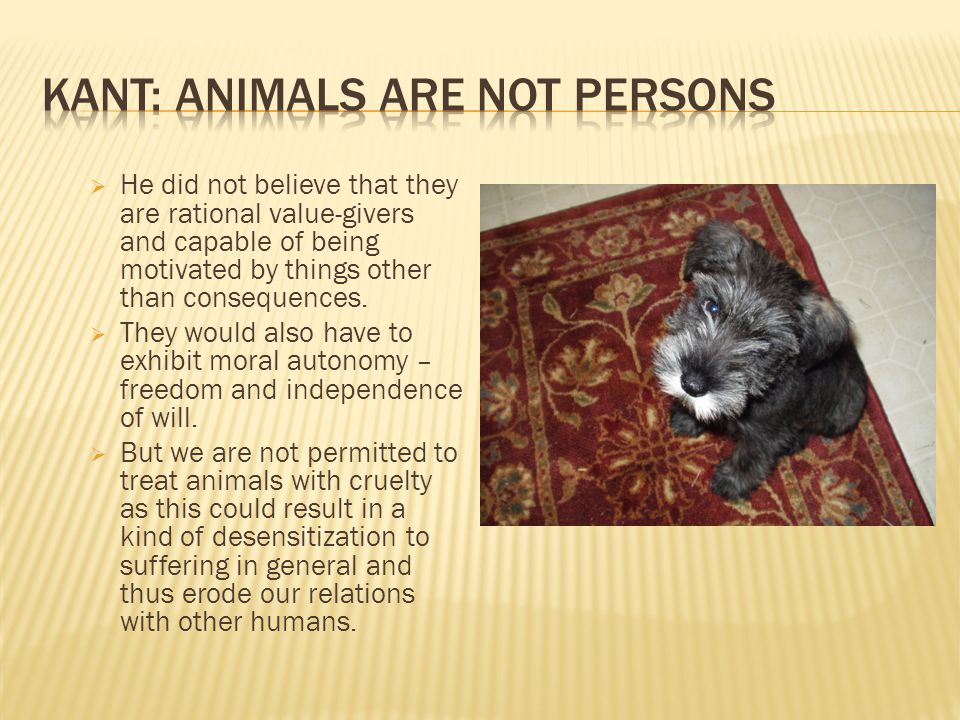 Kant: Animals are not Persons