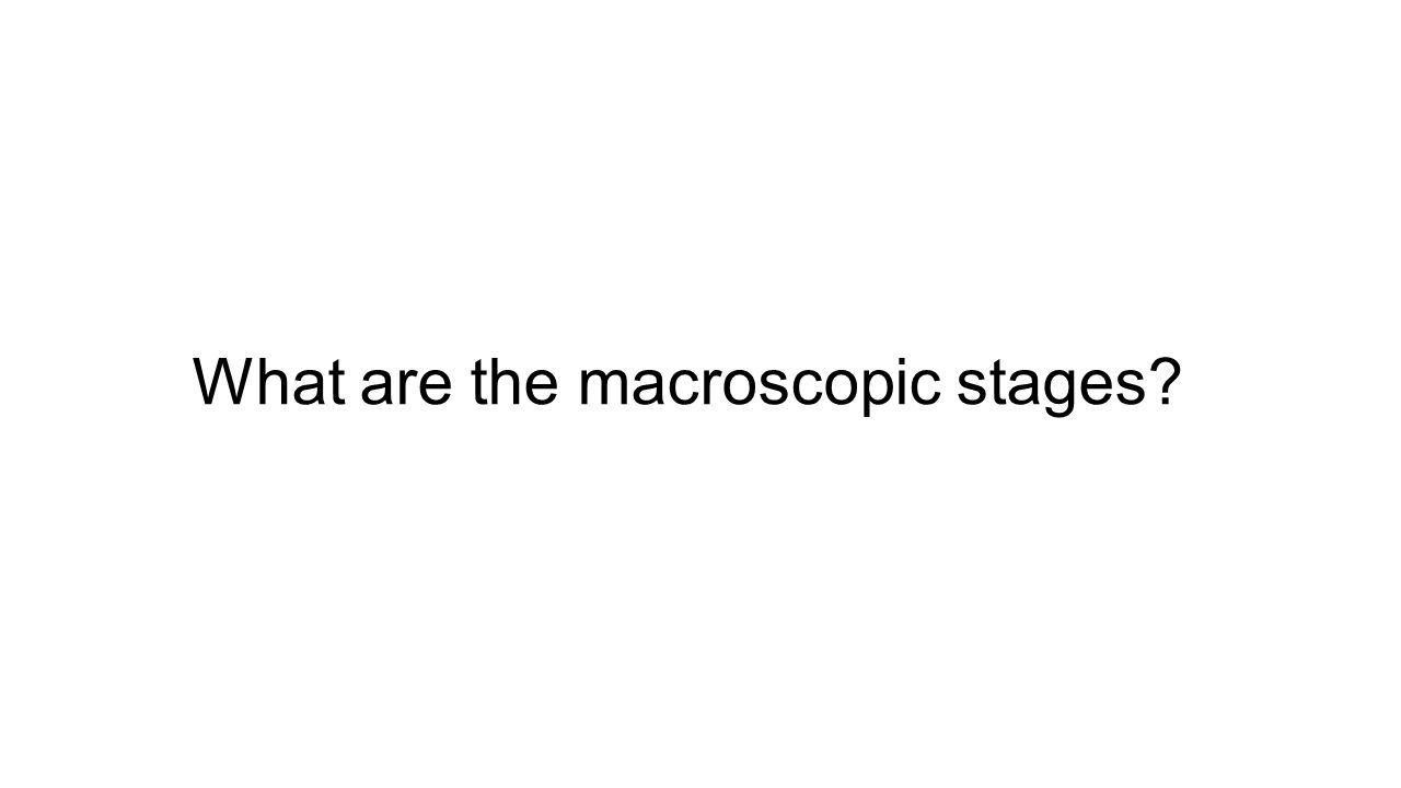 What are the macroscopic stages