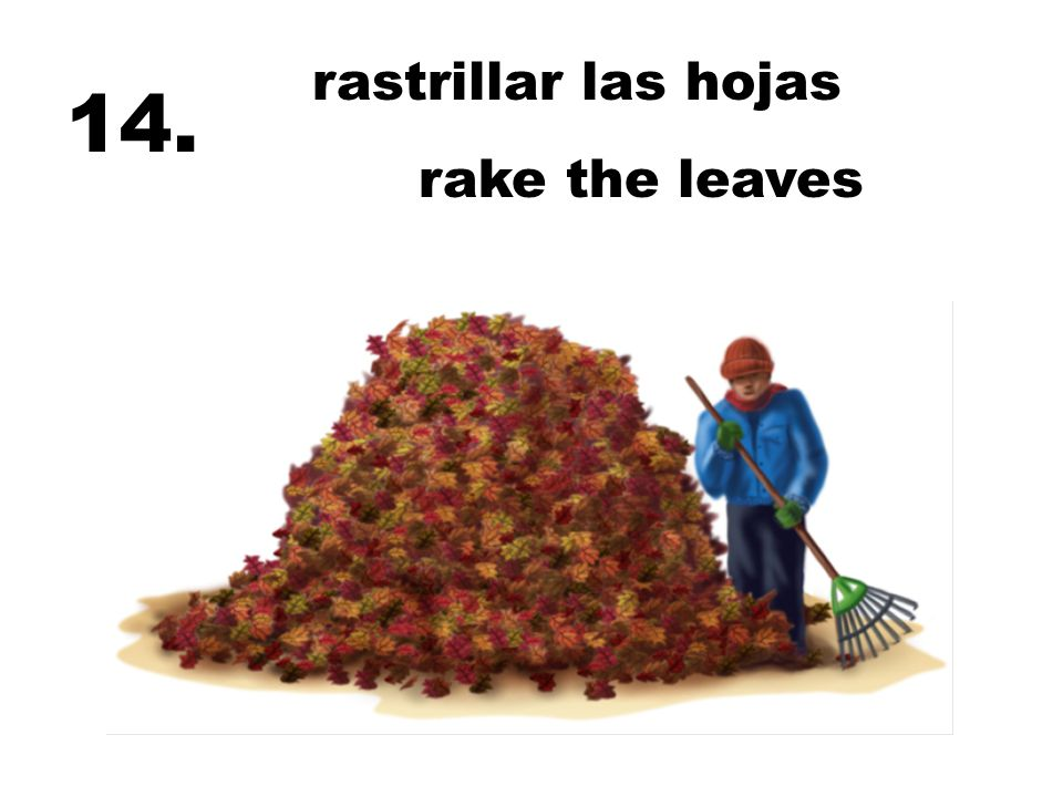 rastrillar las hojas 14. rake the leaves