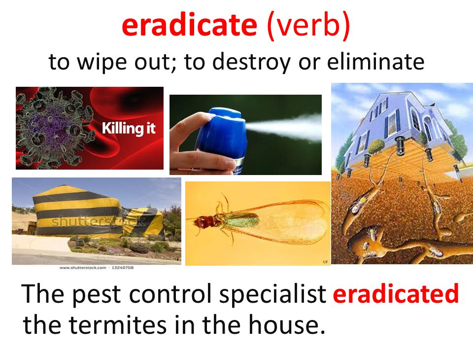 eradicate (verb) to wipe out; to destroy or eliminate