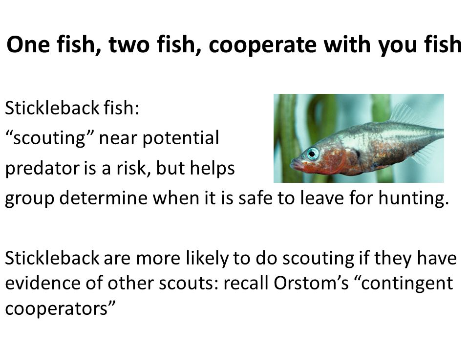 One fish, two fish, cooperate with you fish