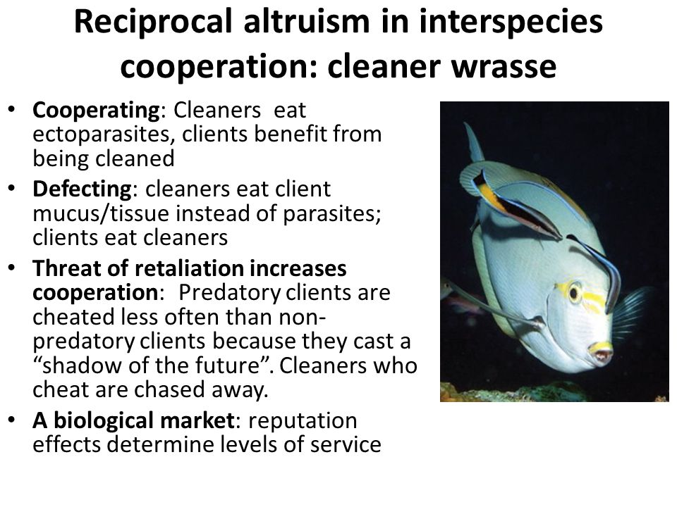 Reciprocal altruism in interspecies cooperation: cleaner wrasse