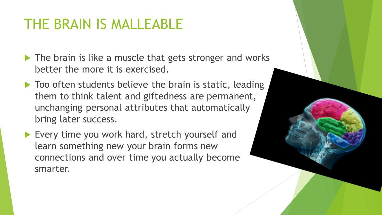 THE BRAIN IS MALLEABLE The brain is like a muscle that gets stronger and works better the more it is exercised.