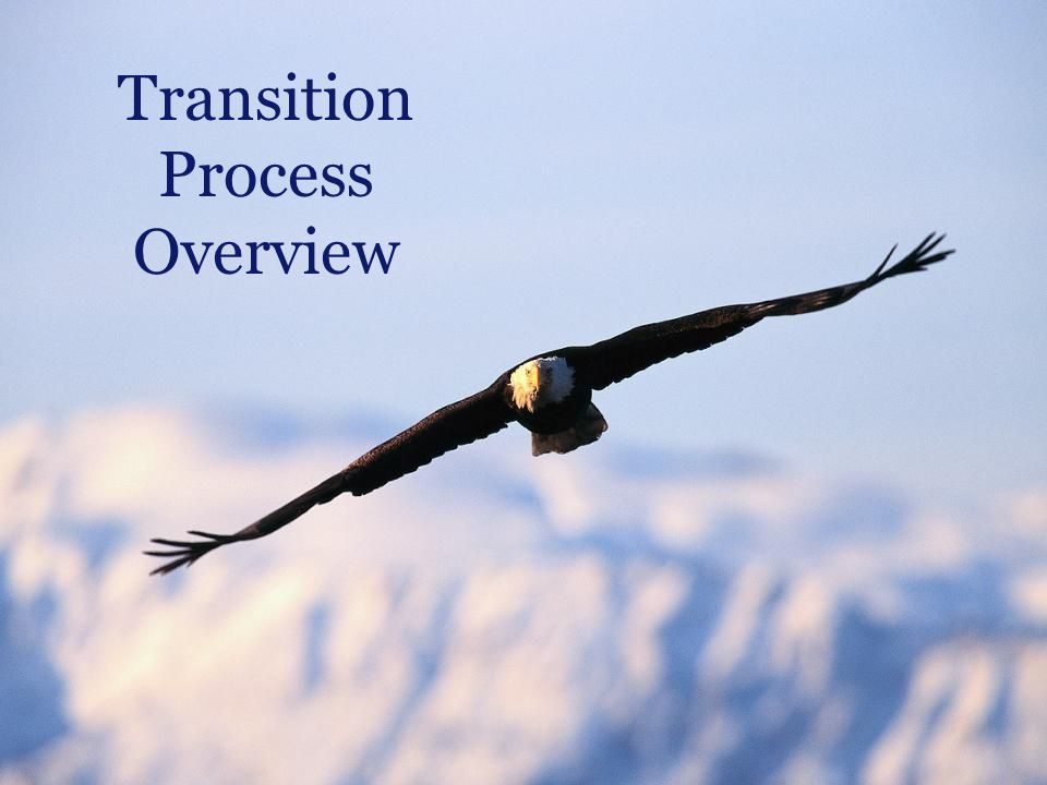 Transition Process Overview