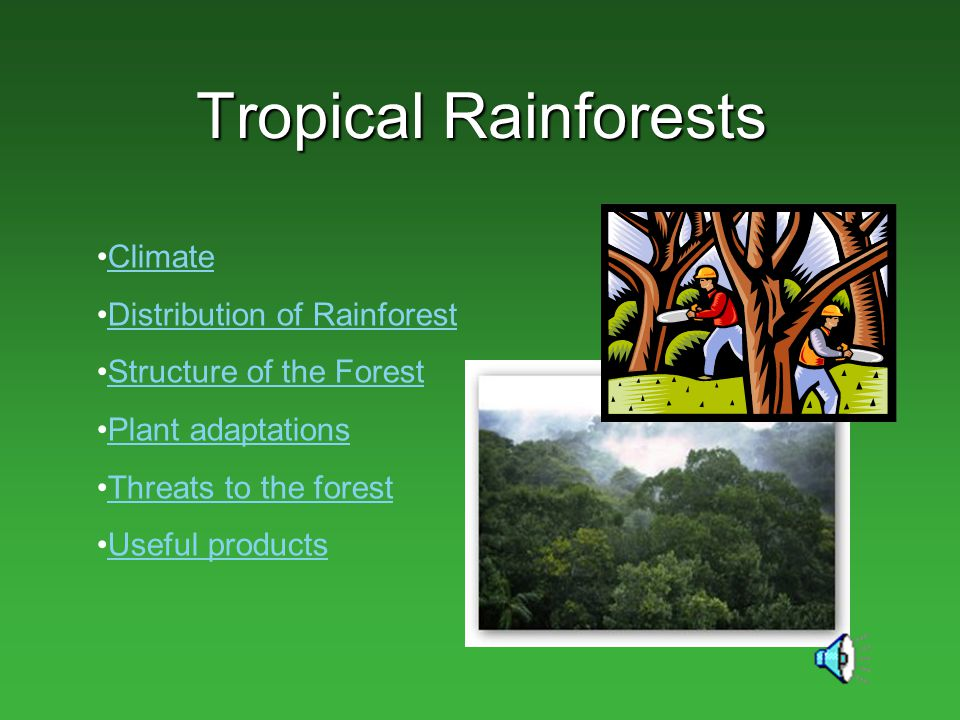 Tropical Rainforests Climate Distribution of Rainforest