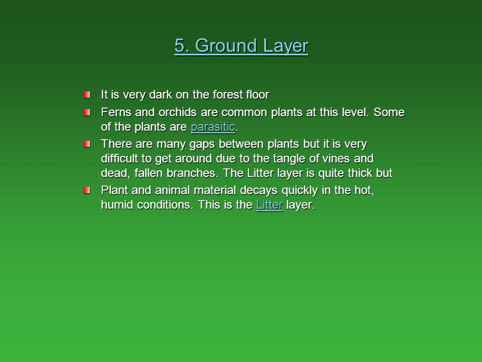 5. Ground Layer It is very dark on the forest floor